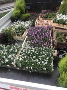 CVE-Fleurissement-automne-2020-IMG_1569